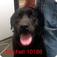 Adopt A Pet :: Mitchell - baltimore, MD