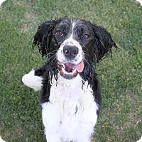 Adopt A Pet :: Jinny - Loves the Water! - Bend, OR