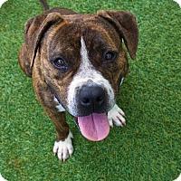 Adopt A Pet :: Milton - Miami, FL