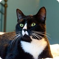 Adopt A Pet :: Noah - Homewood, AL