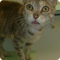 Adopt A Pet :: Cassandra - Hamburg, NY