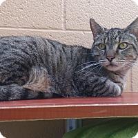 Adopt A Pet :: Sarge - Chula Vista, CA