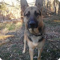 Adopt A Pet :: Max - Louisville, KY