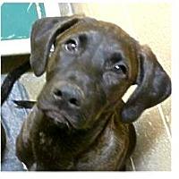 Adopt A Pet :: Cola - Springdale, AR