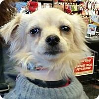 Adopt A Pet :: Lilly - Leduc, AB