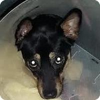 Adopt A Pet :: Katrina - Worcester, MA