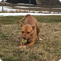 Adopt A Pet :: Pebbles - Pennsville, NJ