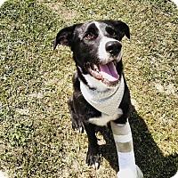 Adopt A Pet :: Buddy - Daleville, AL