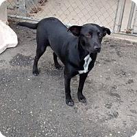 Adopt A Pet :: Raven - Seahurst, WA
