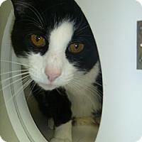 Adopt A Pet :: Oliver - Hamburg, NY