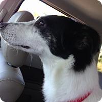 Adopt A Pet :: Lizzie - Alpharetta, GA