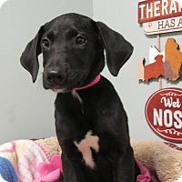 Adopt A Pet :: Brooklyn - Groton, MA