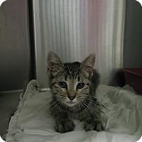 Adopt A Pet :: Isadora - Cody, WY