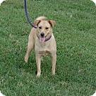 Adopt A Pet :: Norma Jean