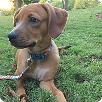 Adopt A Pet :: Barbi - CUMMING, GA