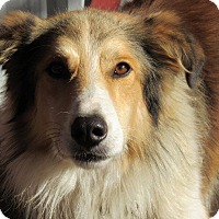 Adopt A Pet :: Colby - Kiowa, OK
