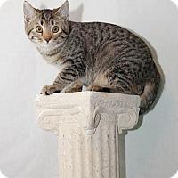 Adopt A Pet :: Artemis - Scarborough, ME