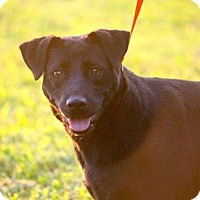 Adopt A Pet :: JoJo~ meet me! - Glastonbury, CT