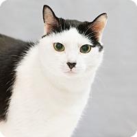 Adopt A Pet :: Pongo - Houston, TX