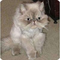 Adopt A Pet :: Bosley - Davis, CA