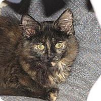 Adopt A Pet :: Jasmine & Jacelyn - Richfield, OH