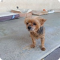 Adopt A Pet :: Fifi - Acton, CA
