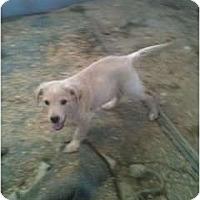 Adopt A Pet :: Sunny - Glastonbury, CT
