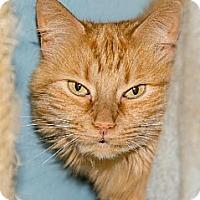 Adopt A Pet :: Gia (3) - Ashland, MA