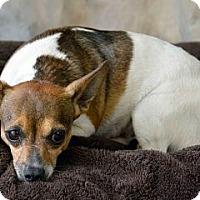 Adopt A Pet :: Poncho - Clermont, FL