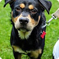 Adopt A Pet :: Sullivan - Tinton Falls, NJ