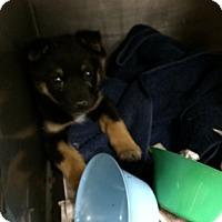 Adopt A Pet :: Sam - Westminster, CO