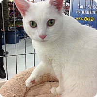 Adopt A Pet :: Moon and Salem - Sterling Hgts, MI
