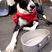 Adopt A Pet :: KRISTIN - Los Angeles, CA