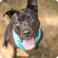 Adopt A Pet :: Luigi - Crescent City, CA