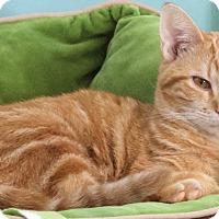 Adopt A Pet :: Carson - St Louis, MO