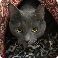 Adopt A Pet :: Chevy - Lakewood, CO