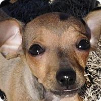 Adopt A Pet :: Newt - MINNEAPOLIS, KS