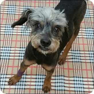 Terrier (Unknown Type, Medium) Mix Dog for adoption in Shreveport, Louisiana - Peanut