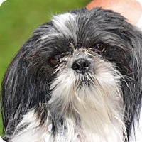 Adopt A Pet :: Mina - Doylestown, PA