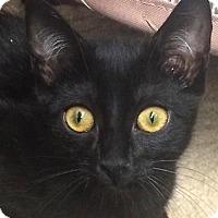 Adopt A Pet :: DK - san diego, CA