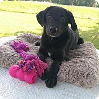 Adopt A Pet :: Alexis (MD-Kelly) - Newark, DE
