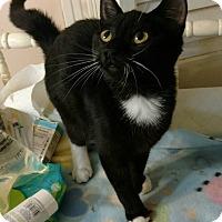 Adopt A Pet :: Roxy - Texarkana, AR