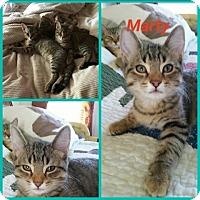 Adopt A Pet :: Marty - Aurora, IL