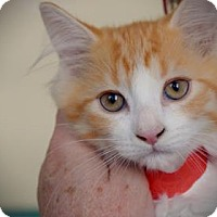 Adopt A Pet :: Ney - Wichita, KS