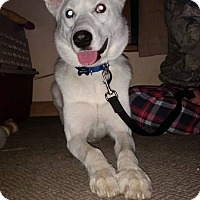 Adopt A Pet :: Jasper - Cavan, ON
