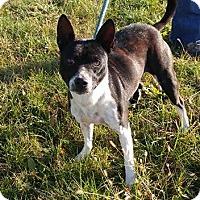Adopt A Pet :: Cowboy - Trenton, MO
