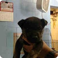Adopt A Pet :: URGENT NOW!  San Bernardino - San Bernardino, CA