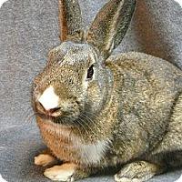 Adopt A Pet :: Kendrick - Newport, DE