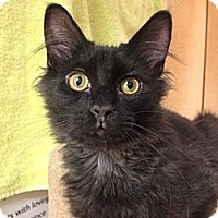Adopt A Pet :: Boo - Foothill Ranch, CA