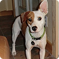 Adopt A Pet :: Hattie - Sacramento, CA